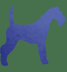 Dog Fitting